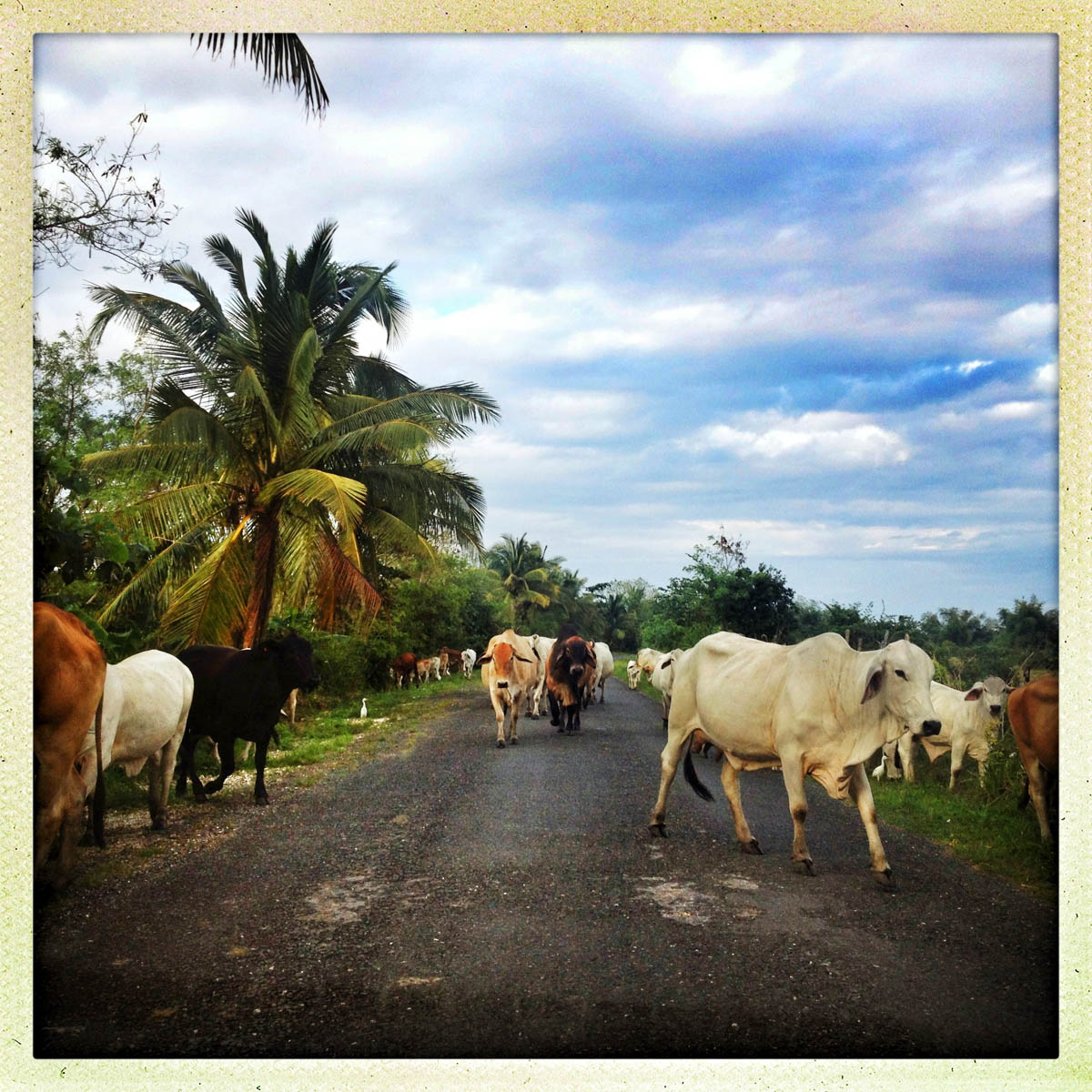 iphone-travel-jamaica-37